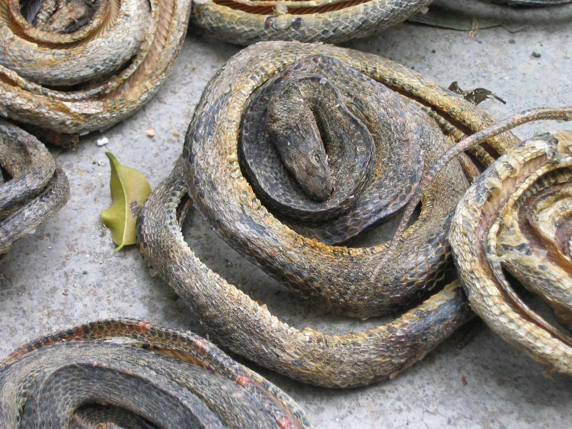 Roadside snakes